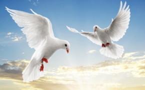 снятся голуби