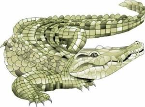 снится крокодил