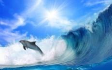 снится дельфин
