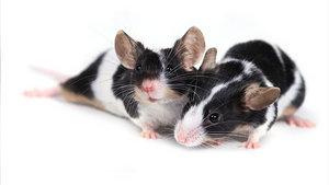 снятся мыши